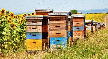 Ukrainian Honey House in EUgardens.EU